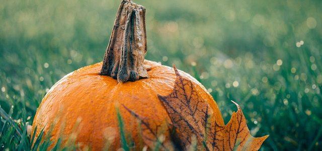 pumpkin patches in surrey