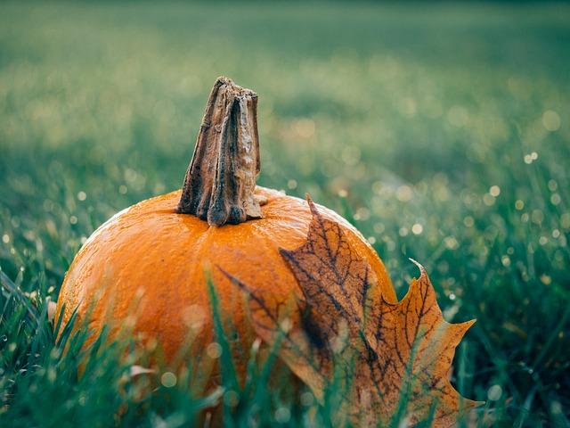 Pumpkin Patches In Surrey 2019